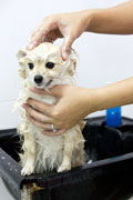 bathing your pet wih chanson acidic water